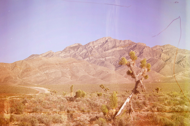 Joshua tree in nowher