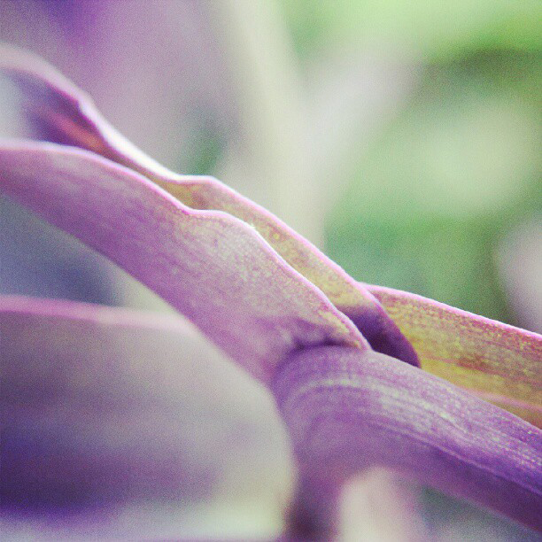 Purple Flower Insta